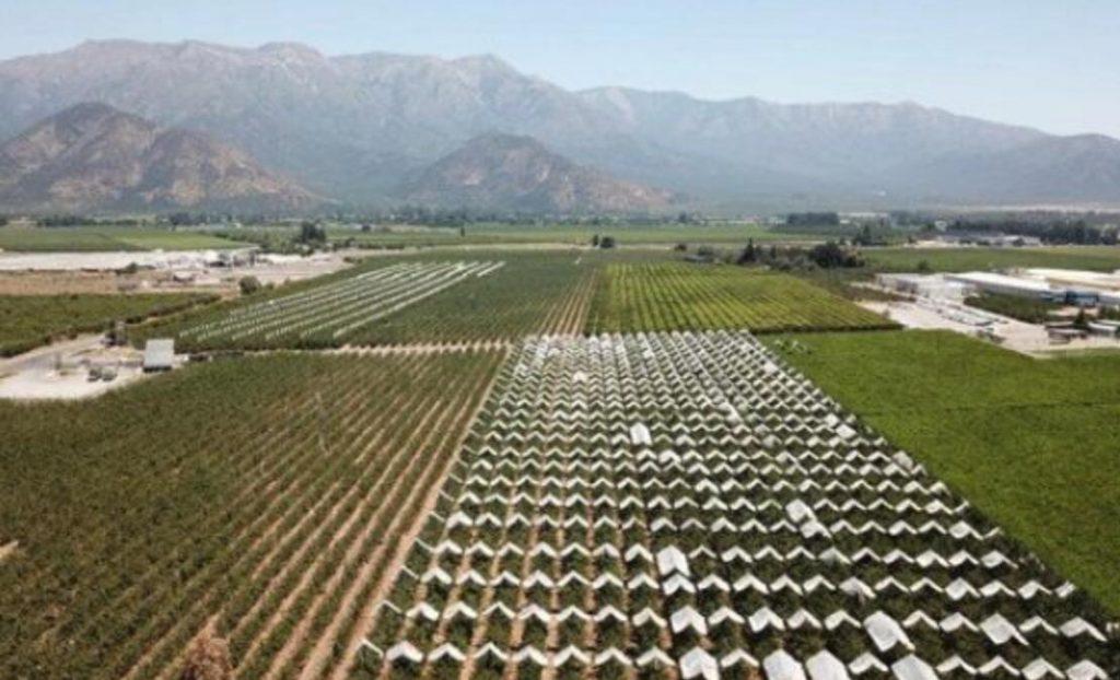 智利总统皮涅拉设立农业和粮食部