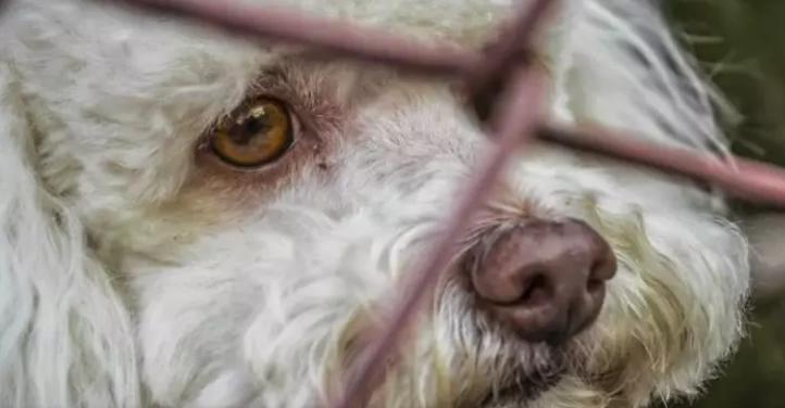 Providencia区发现非法宠物养殖场 80多只宠物被解救