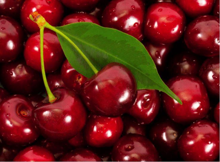 智利是中国第二大水果进口国