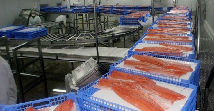 受到冠状病毒的影响, 智利暂停对华输出三文鱼