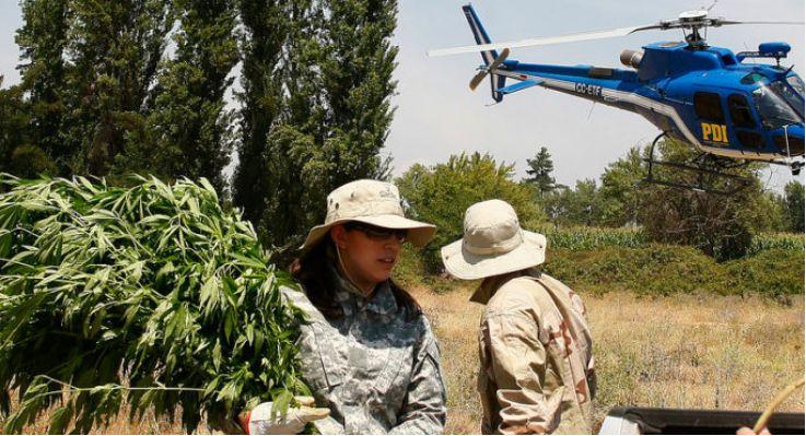 PDI在Linares军事基地发现上千株大麻