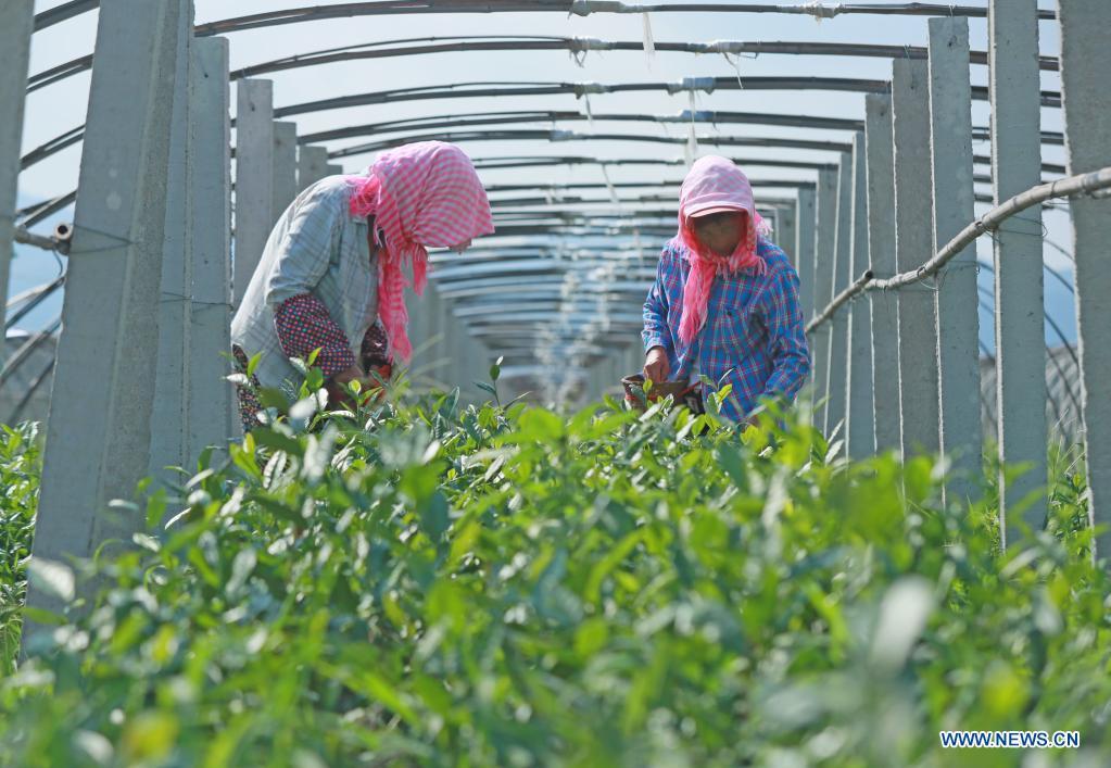 Agricultores de toda China ocupados con negocios agrícolas